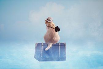 猫、スーツケース